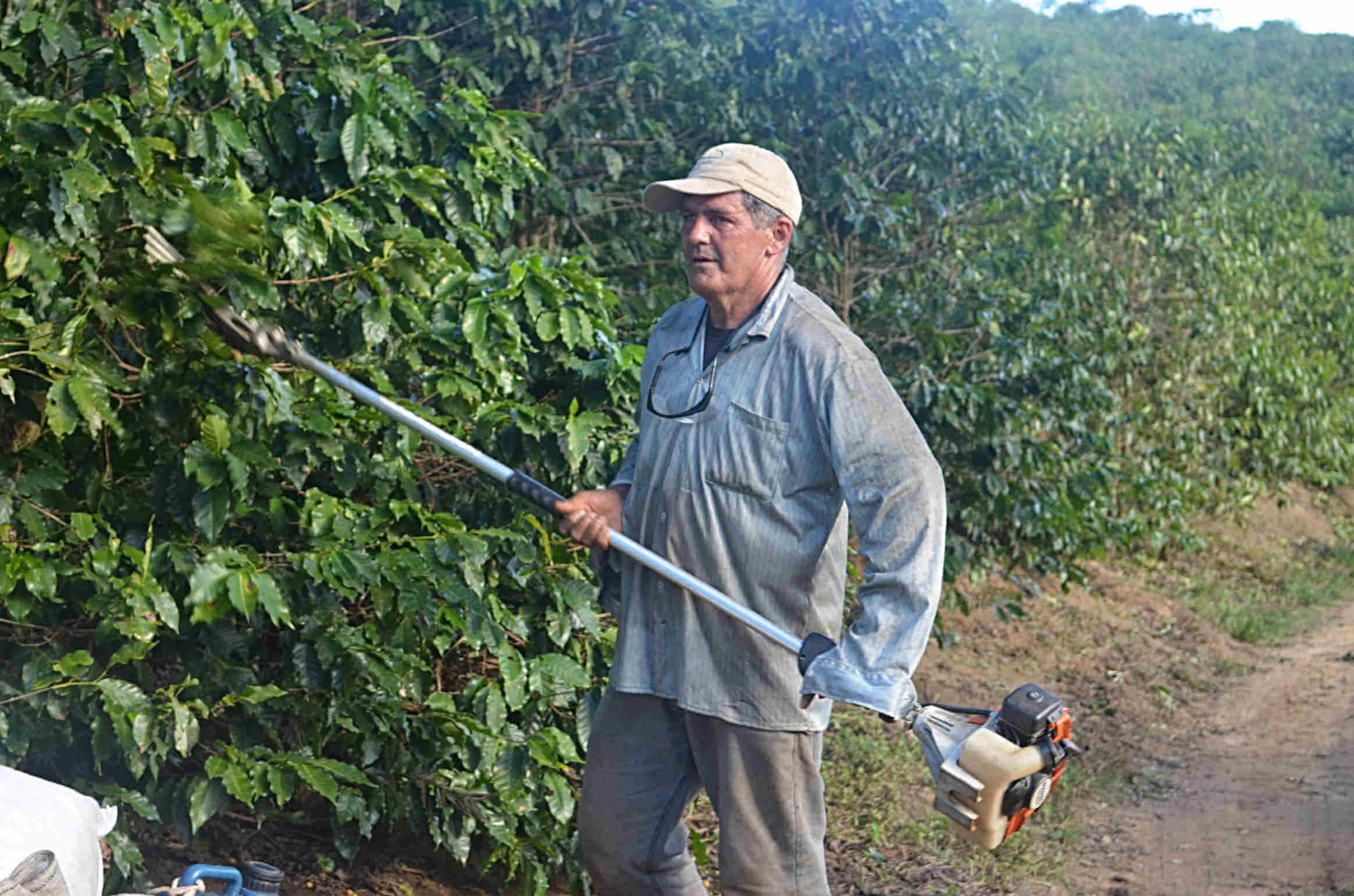Zbiory kawy w Brazylii – Rzadko spotykane w Brazylii zbiory na wpół zmechanizowane, wykonywane przy użyciu specjalnych urządzeń.