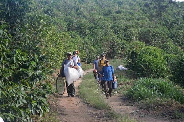 Zbiory kawy w Brazylii – Po zakończonym dniu pracy zbieracze rozchodzą się do domów.