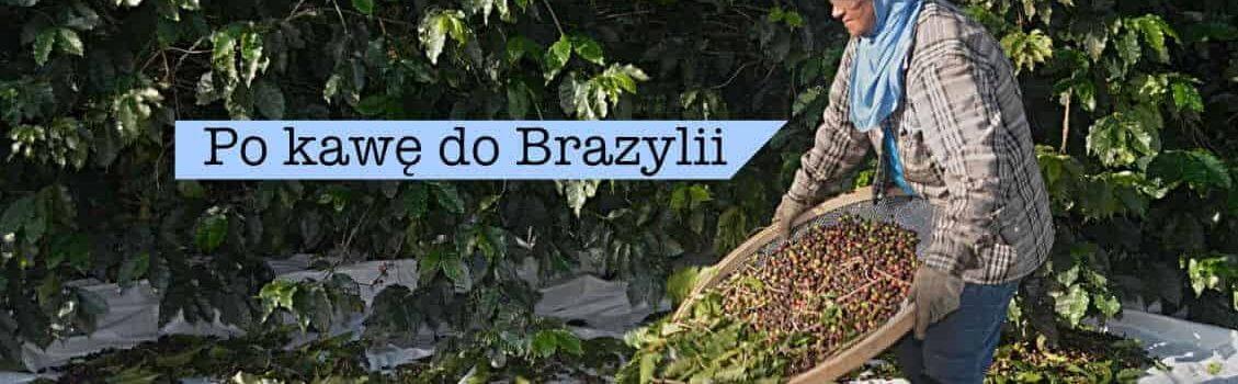 Po kawę do Brazylii