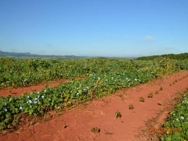 Rośliny, których zadaniem jest częściowe zatrzymanie wody w glebie